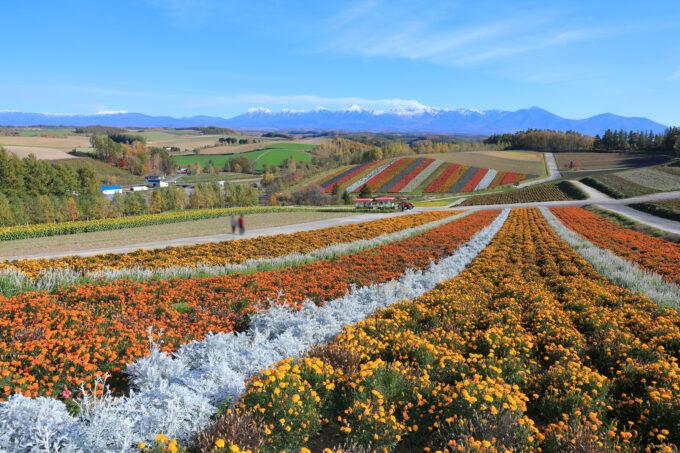 秋の四季彩の丘