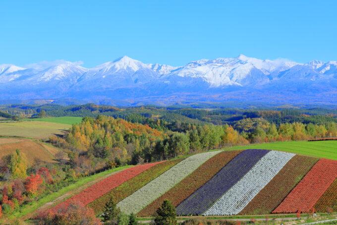四季彩の丘と山々