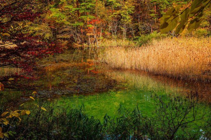 五色沼の秋の様子