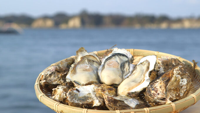 東松島の牡蠣