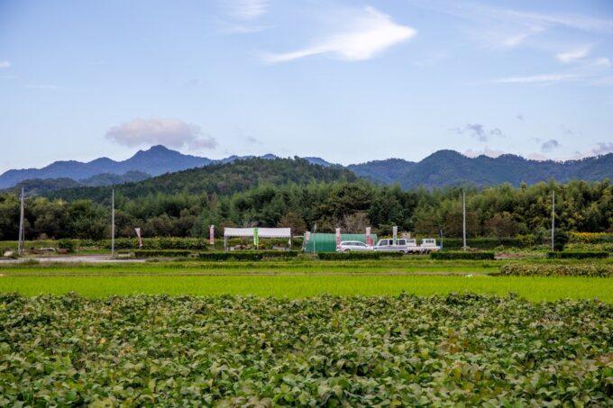 黒枝豆畑と直売所